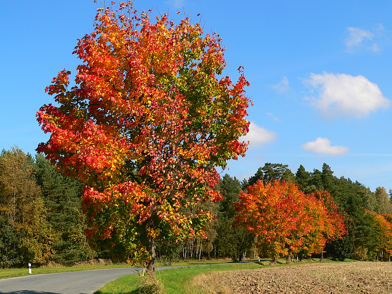 Podzimní střípky 2010