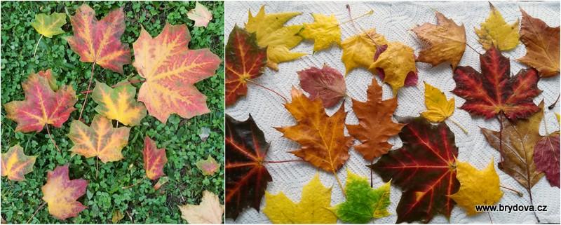Voskování listů