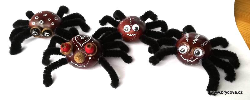 Kaštanoví pavouci